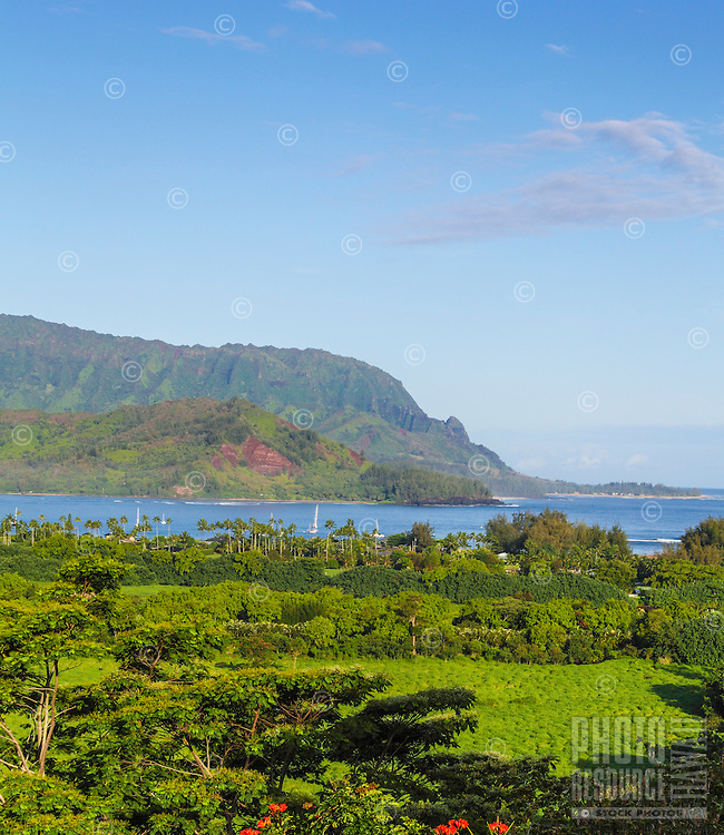 A lush view from an overlook of Hanalei, Kaua'i, with Mt. Makana (a.k.a. Bali Hai) at the right end of the mountains.
