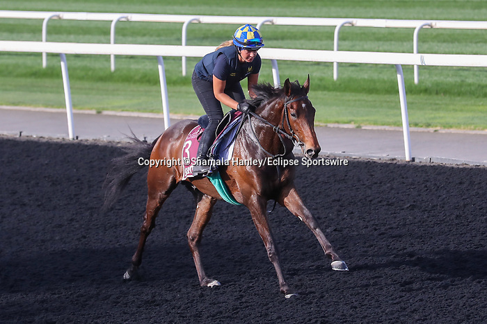 March 25, 2021: Subjectivist (GB) trains on the track for trainer Mark Johnson at Meydan Racecourse, Dubai, UAE. Shamela Hanley/Eclipse Sportswire/CSM