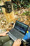 African Golden Cat (Caracal aurata aurata) biologist Laila Bahaa-el-din looking at camera trap image of African Golden Cat, Lope National Park, Gabon