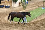 August 5th 2010: Zenyatta at Del Mar Race Track in Del Mar CA.