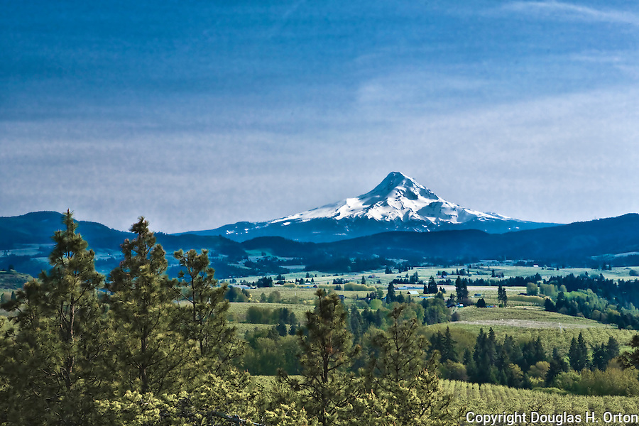 Majestic Mount Hood rises over the Hood River Valley east of the town of Hood River in the Columbia River Gorge, Oregon.  This view is from Panorama Point Park near the town of Hood River.  Hood River, east of Portland, is a favorite of wind surfers and skiers alike and is known as orchard and wine country.  Farms, orchards and vinyards dominate the valley.