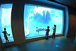 Detroit Zoo Arctic Exhibit