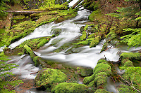 Big Spring Creek with mossy rocks. Gifford Pinchot National forest, Washington.
