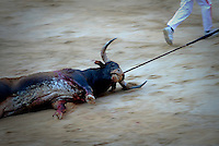 A bull dead is seen during a bullfight of the San Fermin festival at Pamplona's bullring on July 8, 2012, in Pamplona, northern Spain. The festival is a symbol of Spanish culture that attracts thousands of tourists to watch the bull runs despite heavy condemnation from animal rights groups . (c) Pedro ARMESTRE