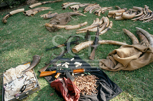 Lusaka, Zambia. Elephant tusks, rhino horns, weapons and ammunition seized from poachers.