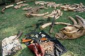 Lusaka, Zambia. Elephant tusks, rhino horns, weapons and ammunition seized from poachers.