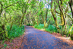 Bike and hiking trail through dune habitat at South Beach State Park, Newport, Oregon