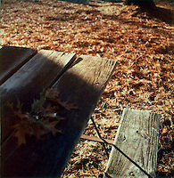 Corner of picnic table with fallen leaves<br />