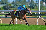 TORONT,CANADA-SEP 14: Starship Jubilee,ridden by Luis Contreas,wins the Canadian Stakes at Woodbine Race Track on September 14,2019 in Toronto,Ontario,Canada. Kaz Ishida/Eclipse Sportswire/CSM