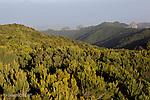 Forêt de Laurisylve du parc national de Garajonay vu depuis le sommet de Gomera (Alto de Garajonay, 1487 m) Les forêts de laurisylve de Macaronésie sont des reliques d'un type de végétation qui couvrait à l'origine la plupart du bassin de la Méditerranée lorsque le climat de la région était plus humide...canary laurisilva viewed from the Alto de Garajonay, highest summit of Gomera  (1487 m).The Garajonay NationalPark  protects a unique forest ecosystem , the canary laurisilva, which originally thrived in the mist-filled zones of the northen solpes of the mountainous western canary islands..canary laurisilva is a genuine  living fossil, the remains of subtropical forests which grew along the banks of what we now know as the mediterranean sea, some millions  of years ago int he teritary period..Garajonay is the most extensive and best preserved surviving representative of this ecosystem and contains half the total surface area of mature laurisilva found in the Canary archipelago..