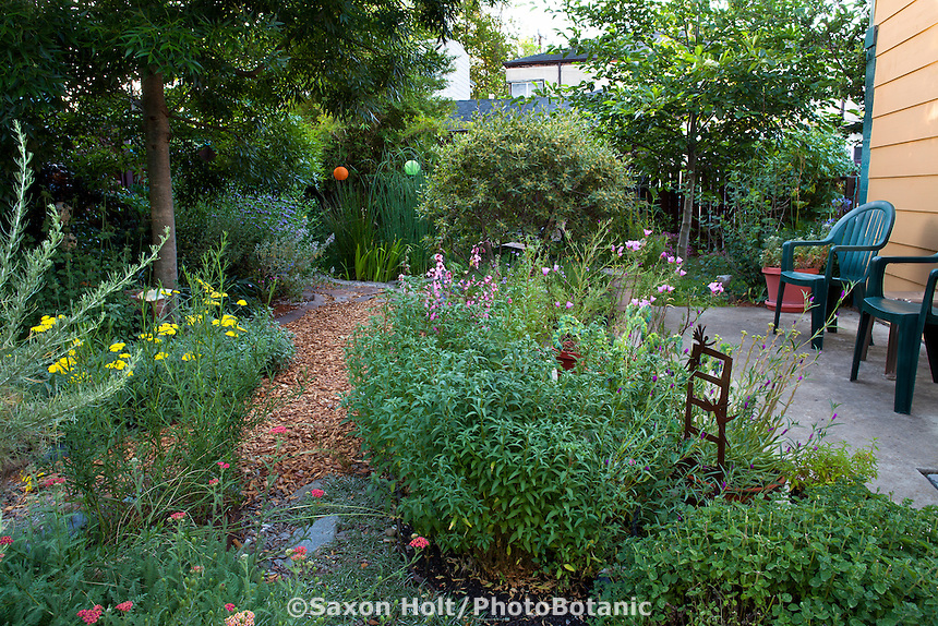 Path between garden rooms with cement patio in drought tolerant back yard garden, Richmond California