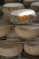 Europe/France/Corse/2A/Corse-du-Sud/Bastelicaccia: fromage de brebis de Bastelicaccia de Mr Mathieu Bernardi Berger et producteur de fromage