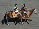 October 9, 2010.Meteore riden by Rafael Bejarano  in the post parade for The Oak Tree Mile at Hollywood Park, Inglewood, CA._Cynthia Lum/Eclipse Sportswire.com