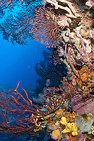 Coral Reef Scenic<br /> Fish Mouth<br /> Grenadines