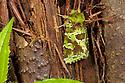 Moth showing moss-like camouflage. Andasibe-Mantadia NP, Eastern Madagascar.