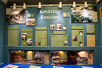 The Amazing Rescues display at the Pacific Tsunami Museum in downtown Hilo, Big Island of Hawai'i.