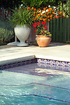 A detail shot of the edge a suburban back yard swimming pool at sunrise, showcasing attractive decorative concrete patio work, a beautiful blue tile mosiac within the in-ground swimming pool, and edged with pots of colorful mixed annuals and perennials.