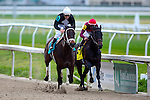 February 21, 2015:  Street Babe with Kerwin D Clark up wins the Mineshaft Handicap at the New Orleans Fairgrounds Risen Star Stakes Day. Steve Dalmado/ESW/CSM