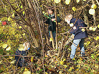 Kinder, Jungen bei der Schnittpflege eines Haselnuss-Strauches (Heckenschutz), Kinder schneiden und sägen Haselstrauch