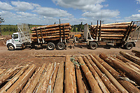 URUGUAY Rivera , FSC eucalyptus forest of company Urufor for timber , pulp and biomass use / URUGUAY Rivera , FSC Eukalyptus Forst der Firma Urufor fuer Holz , Zellulose sowie Biomasse Nutzung