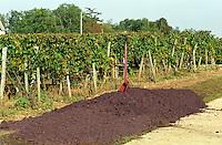 Press residue: grape skins and pips. Chateau Sansonnet, Saint Emilion, Bordeaux, France