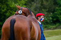 FRA-Gaspard Maksud presents Cado Louvo during the First Horse Inspection for the CCI-L 4*. 2021 GBR-Bicton International Horse Trials. Devon. Great Britain. Copyright Photo: Libby Law Photography