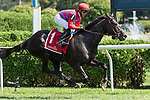 September 05, 2020:  Myhartblongstodady #1, ridden by Jose Lezcano, trained by Jorge R. Abreu  wins the Yaddo S. on New York Bred Stakes Day at Saratoga Race Course in Saratoga Springs, New York. Rob Simmons/CSM