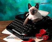 Xavier, ANIMALS, REALISTISCHE TIERE, ANIMALES REALISTICOS, cats, photos+++++,SPCHCATS913,#a#, EVERYDAY