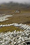 Bellsund, Kapp Toscana . de nombreux vestiges temoignent de la presence d une station baleiniere (nombreux ossements de belougas, balenieres, meule...)