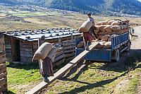 Phobjikha, Bhutan.  Farmers Loading Potatoes for Transport to Market.