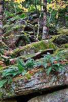 Granite and ferns, Acadia National Park, Maine, USA