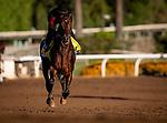OCT 25: McKinzie gallops at Santa Anita Park in Arcadia, California on Oct 25, 2019. Evers/Eclipse Sportswire/Breeders' Cup