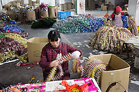 November 28, 2015, Yiwu, China - (L-R): Wang Huimei, 22 and her mother in law Grandma Wang, 65 at work in tandem at the Xin Shua tinsel factory. They are both from Yunnan and are paid by each bunch of tinsel they pack into cardboard boxes. The factory makes around 30 million RMB (GPB 3.12) of tinsel each year.Photo by Dave Tacon / Sinopix