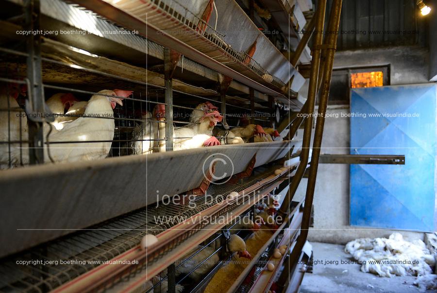 TURKEY Bandirma, hen farm for egg production which are supplied to Istanbul and Bursa, dead animals dumped at entrance / TUERKEI Bandirma, Huehnerfarmen, Legebatterie fuer die Eierproduktion, taegliche Lieferung von 1,5 Mio Eiern nach Bursa und Istanbul, tote Tiere am Eingang liegend