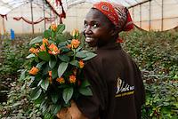 KENYA Thika near Nairobi, Simbi Roses is a fair trade rose flower farm which produces rose as cutting flowers for export to europe, worker Judy Muthoni / KENIA Thika bei Nairobi, Simbi Roses ist eine fairtrade zertifizierte Blumenfarm die Rosen fuer den Export nach Europa anbauen, Pflueckerin Judy Muthoni