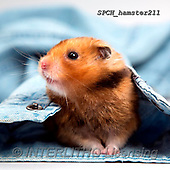 Xavier, ANIMALS, REALISTISCHE TIERE, ANIMALES REALISTICOS, photos+++++,SPCHHAMSTER211,#A#, EVERYDAY ,funny