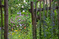 Unser Naturgarten in Hammer, Garten, insektenfreundlicher Garten, vogelfreundlicher Garten, blütenreich, Wildblumen, Wildblumengarten, Gartenzaun, Zaun, Staketenzaun, Stakettenzaun, Lattenzaun, Holzzaun, Rollzaun, garden fence, fence, hash mark, hashmark, batten fence, lattice fence, lattice fencing, paling fence, Pforte, Gartenpforte, Eingang, Blick in den Garten, einladend