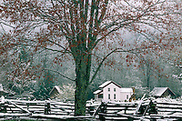 Red maple and Gregg-Cable House<br /> Cable Mill Area, Cades Cove<br /> Great Smoky Mountains National Park<br /> Tennessee