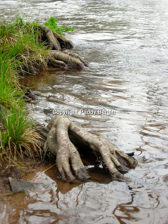 Camping,camping in Wales,camping by the river,tree roots like hands