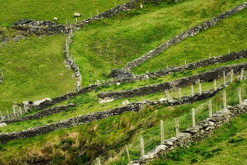 Stone fences Slea Head Drive. County Kerry, Ireland
