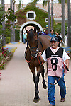DEL MAR,CA-AUGUST 20: Ashleyluvssugar is entering the paddock before the Del Mar Handicap at Del Mar Race Track on August 20,2016 in Del Mar,California (Photo by Kaz Ishida/Eclipse Sportswire/Getty Images)