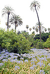 The gardens at El Alcazar in Seville, Spain.