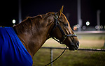 October 25, 2018 : Mind Your Biscuits at Churchill Downs on October 25, 2018 in Louisville, Kentucky. Evers/ESW/CSM