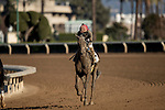 December 26, 2020: Mike Smith and Kiss Today Goodbye at Santa Anita Park in Arcadia, California on December 26, 2020. Evers/Eclipse Sportswire/CSM
