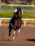 OCT 27: Breeders' Cup Turf entrant Channel Maker, trained by William I. Mott,  at Santa Anita Park in Arcadia, California on Oct 27, 2019. Evers/Eclipse Sportswire/Breeders' Cup