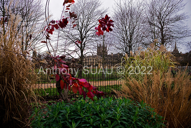 Oxford University<br /> Oxford, United Kingdom<br /> November 29, 2018<br /> <br /> Merton College as sen from the Oxford Botanic gardens
