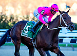 NEW YORK, NY - APRIL 08: Miss Sky Warrior [#5, ridden by Paco Lopez, easily wins the Gazelle Stakes at Aqueduct Racetrack on April 8, 2017 in Ozone Park,  New York. (Photo by Dan Heary/Eclipse Sportswire/Getty Images)