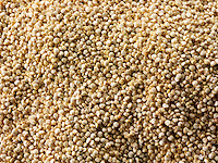 Quinoa grains - Stock Photos