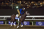 DEL MAR, CA - NOVEMBER 01: Hazit, owned by Eclipse Thoroughbred Partners, Mrs. John Magnier, Michael Tabor & Derrick Smith and trained by Todd A. Pletcher, exercises in preparation for Breeders' Cup Juvenile Turf during morning workouts at Del Mar Thoroughbred Club on November 1, 2017 in Del Mar, California. (Photo by Michael McInally/Eclipse Sportswire/Breeders Cup)