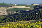 Italien, Piemont, Monferrato: Weinberge und Sonnenblumen bei Vignale Monferrato | Italy, Piedmont, Monferrato: vineyards and sunflowers near Vignale Monferrato